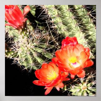 Blooming Cactus at Night Poster