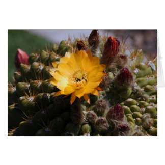 Blooming Cactus Note Card
