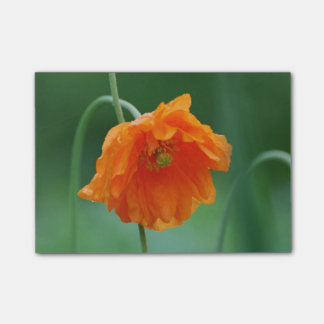Blooming California Poppy Post-it Notes