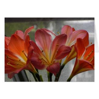 Blooming Clivia Card