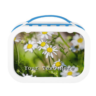 Blooming Daisies Floral Painterly Photograph Lunch Boxes