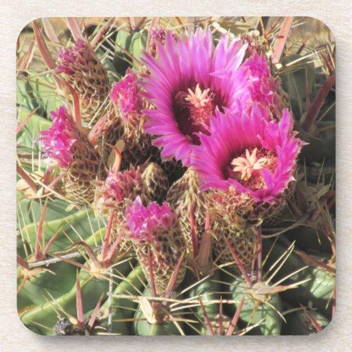 Blooming Devil's Tongue Barrel Cactus Coasters