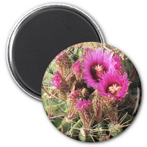 Blooming Devil's Tongue Barrel Cactus Magnet