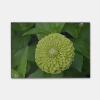 Blooming Green Zinnia Flower Post-it Notes