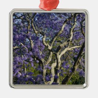 Blooming Jacaranda Trees in New Farm Park, 2 Ornaments