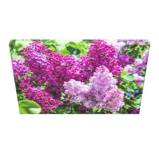 Blooming lilac. canvas print