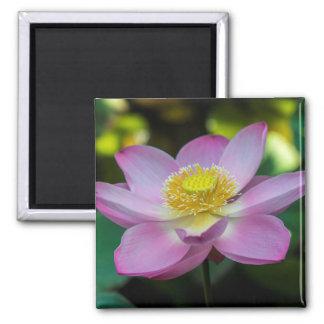 Blooming lotus flower, Indonesia Magnet