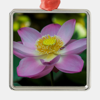 Blooming lotus flower, Indonesia Silver-Colored Square Decoration