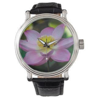 Blooming lotus flower, Indonesia Watch