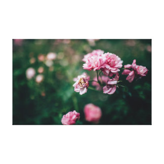 Blooming Pink Flower In A Garden Canvas Print