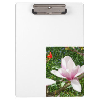 Blooming Pink Magnolia 01.7 Clipboards