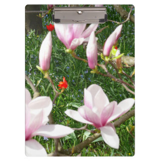 Blooming Pink Magnolia 01 Clipboards