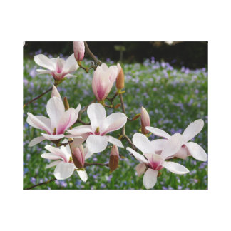 Blooming Pink Magnolia (Tulpenbaum) 03 Canvas Print