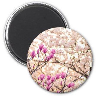 Blooming Pink Purple Magnolias Spring Flower Magnet