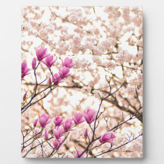 Blooming Pink Purple Magnolias Spring Flower Plaque