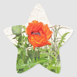 Blooming Red Poppy Star Stickers