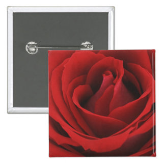Blooming Red Rose Button