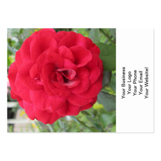 Blooming Red Rose Flower Business Cards