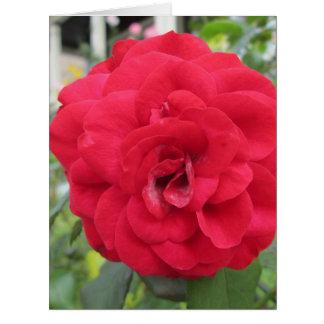 Blooming Red Rose Flower Card