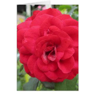 Blooming Red Rose Flower Greeting Card