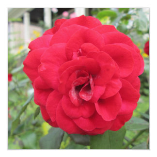 Blooming Red Rose Flower 5.25x5.25 Square Paper Invitation Card