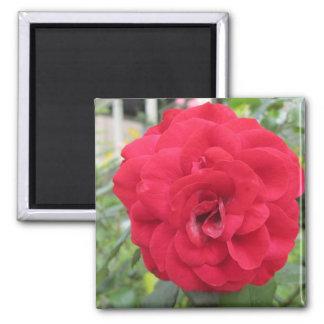 Blooming Red Rose Flower Fridge Magnets