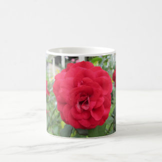 Blooming Red Rose Flower Coffee Mugs