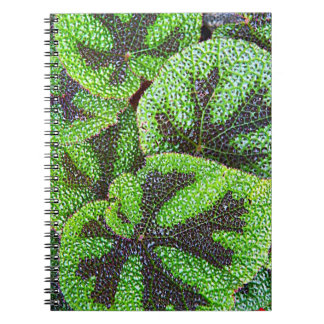 Blooming Rodgersia Floral Notebook