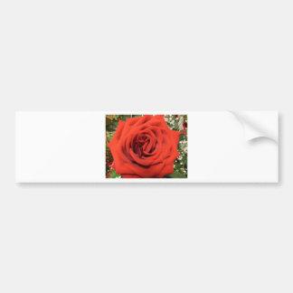 Blooming Rose Bumper Sticker