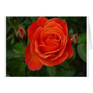 Blooming Rose Orange Red Card