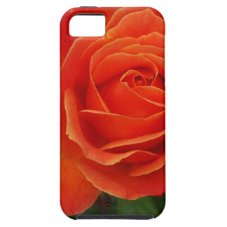 Blooming Rose Orange Red iPhone 5 Cover