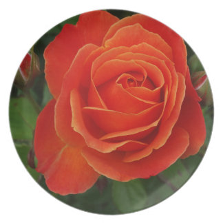 Blooming Rose Orange Red Party Plate