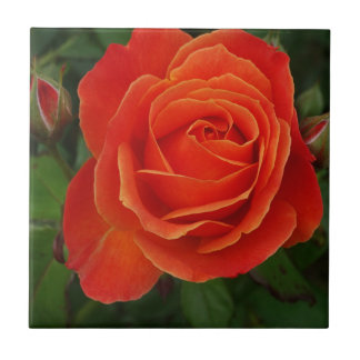Blooming Rose Orange Red Small Square Tile