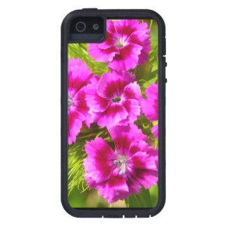 Blooming Sweet William Flowers iPhone 5 Case