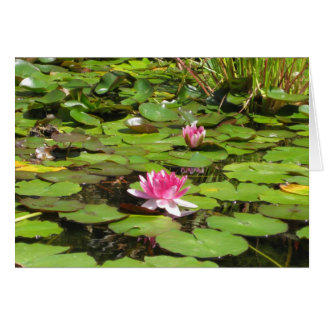 Blooming Water Lillies Card