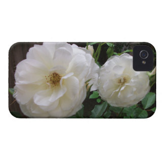 Blooming White Roses Blackberry Bold Cases