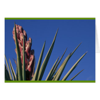 Blooming yucca card