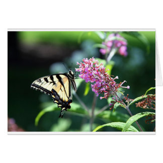 Blooms and Butterflies Collection - Swallow Tail Greeting Card