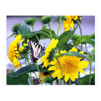 Blooms and Butterflies - Swallow Tail Postcard