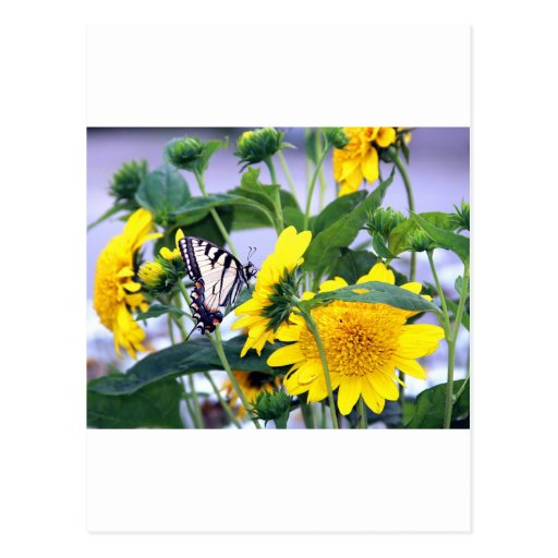 Blooms and Butterflies - Swallow Tail Post Card