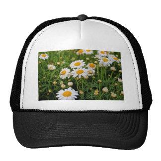 Blooms Boom Cap