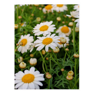 Blooms Boom Postcard