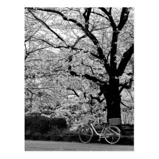 Blossom & Bicycle: Japan Postcard