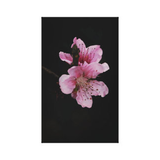 Blossom Close up Stretched Canvas Print