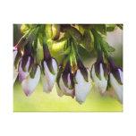 Blossom Flower Buds
