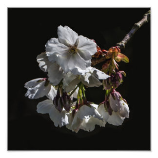 Blossom Flowers Art Photo