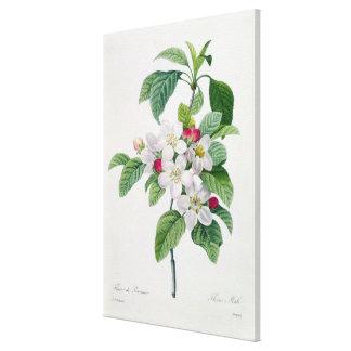 Blossom, from 'Les Choix des Plus Belles Canvas Prints