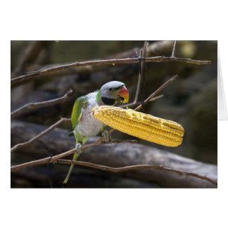 Blossom Headed Parakeet Card