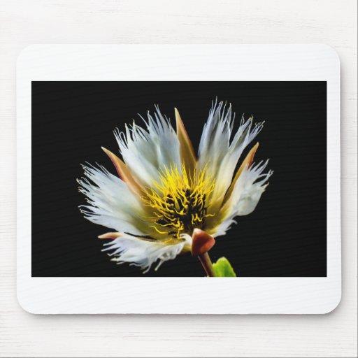 Blossom Mousepads