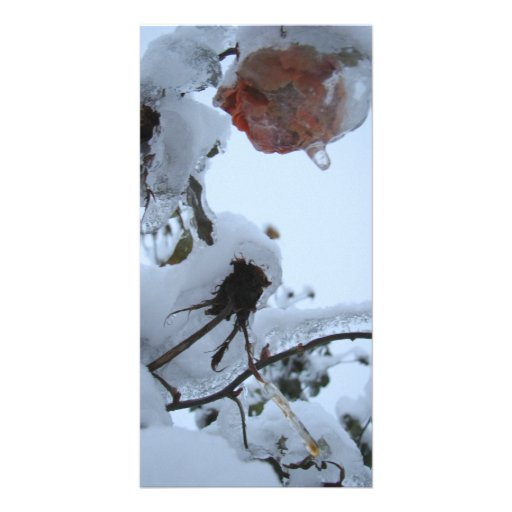 Blossom of Snow Photo Cards